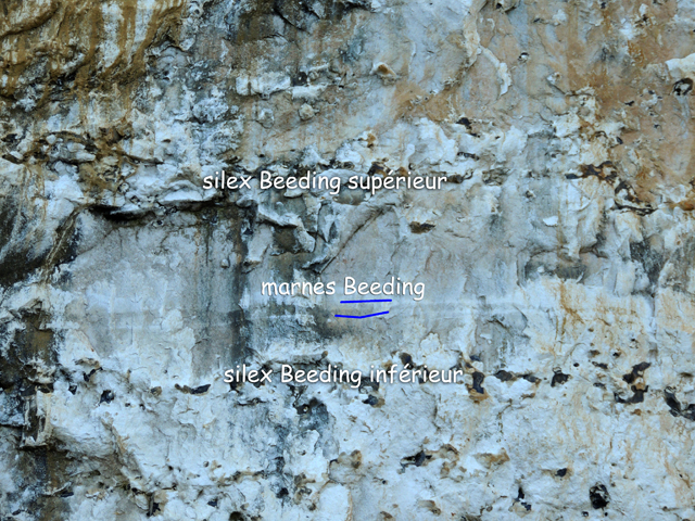 Silex et marne Beeding (vue rapprochée)