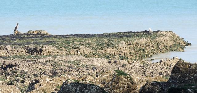 Récifs du platier formés par le HG Anvil