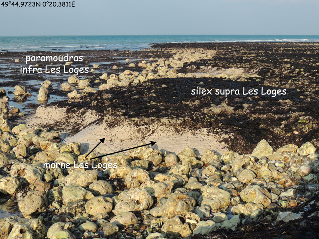 Micro-falaise formée par la marne Les Loges sur le platier