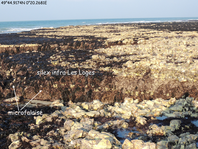 Microfalaise du silex infra-Les Loges 49°44.9174N 0°20.2681E