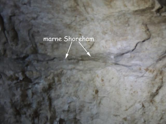 Marne Shoreham