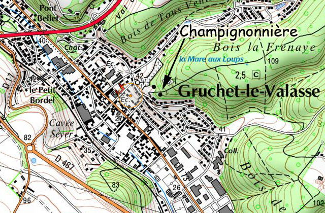 Gruchet_champignon