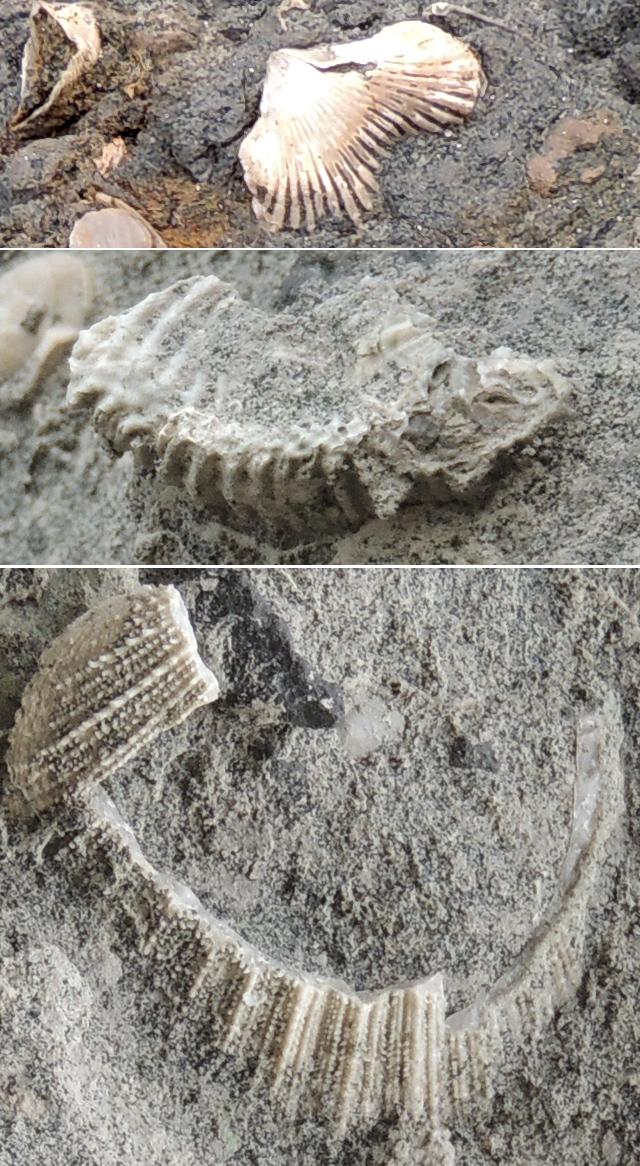 Fossiles du lag basal
