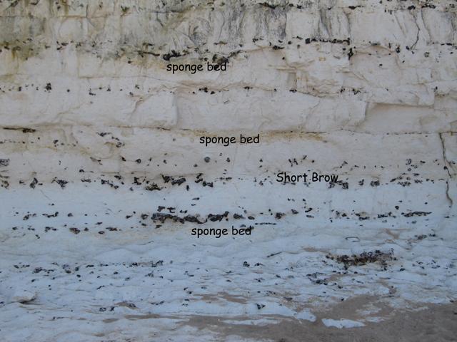 sponge beds