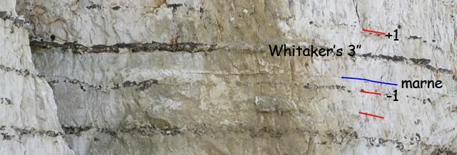 Whitaker's 3''