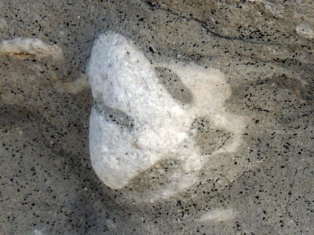 Autre éponge siliceuse du tourtia