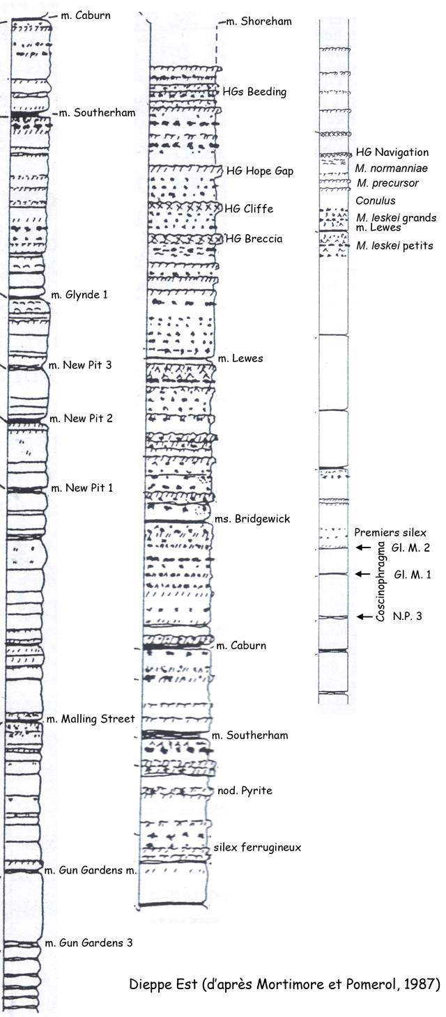 Coupes à l'Est de Dieppe, extraites de Mortimore & Pomerol, 1987
