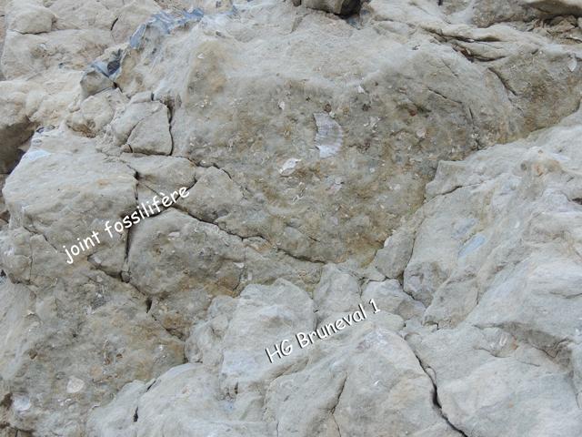 Joint fossilifère au-dessus du HG Bruneval 1