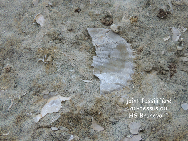 joint fossilifère gros plan