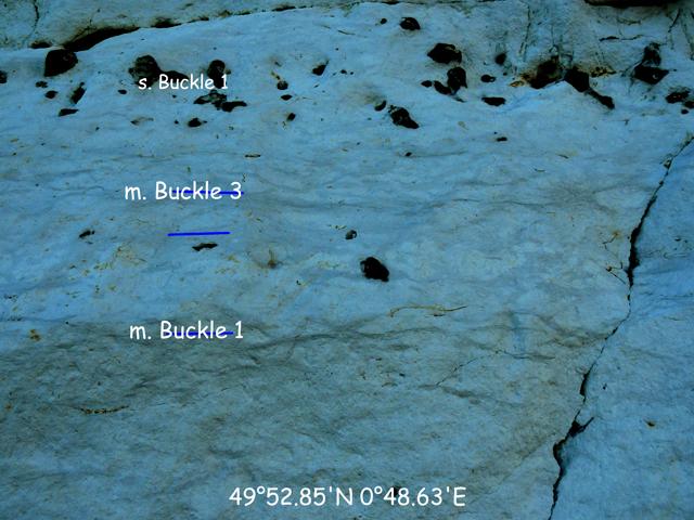 Gros plan sur les marnes Buckle en 49°52.85'N 0°48.63'E