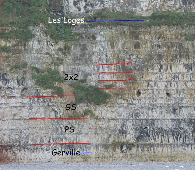 Base de la falaise - coupe 49°44.4862N 0°18.8915E