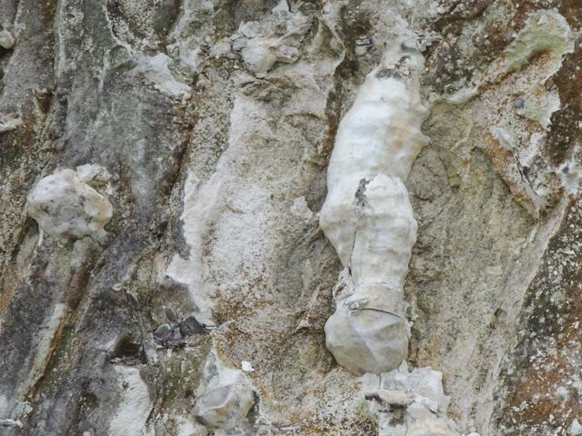 Couche à paramoudras (couche chaotique Bénouville)