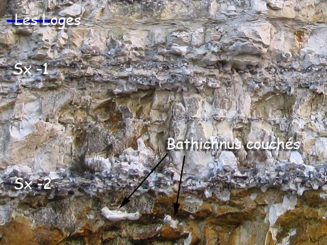Bathichnus