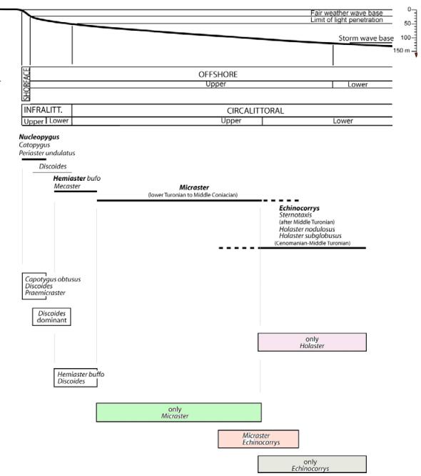 Paléoécologie des échinides in Lasseur (2008)