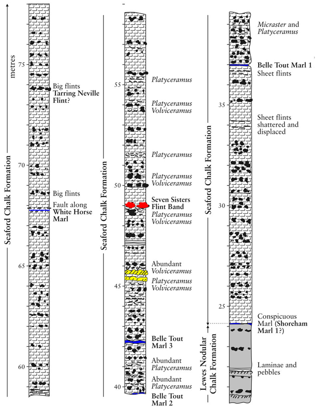Base de la coupe, extrait modifié de Mortimore et al., 2001