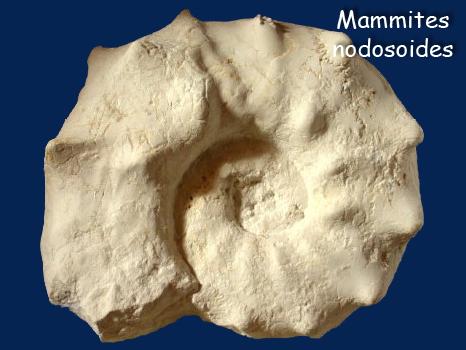 mammites_nodosoides