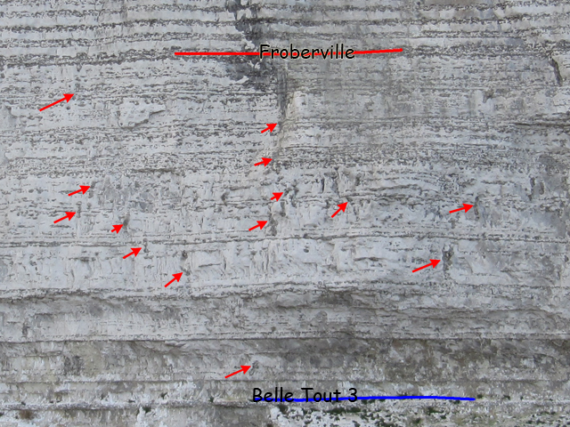 Nombreux pipe-flints entre la marne Belle Tout 3 et le silex Froberville