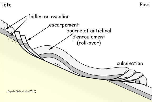Eléments d'un slumping, d'après Gale et al. (2015)